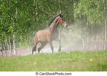 Brown horse running in the dust