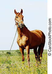 brown horse standing in field