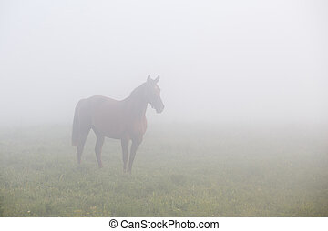 Brown horse standing in morning fog