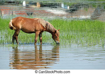 brown horse standing in the water