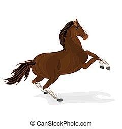 Brown horse wild  stallion