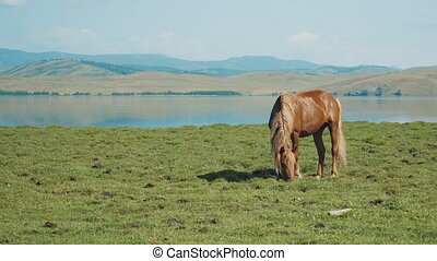 Brown horse with beautiful landscape on background - Brown...