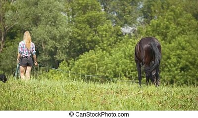 Brown horses eating grass and walking at rural field. Woman watching them