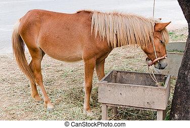 brown horses eating hay