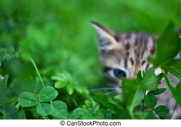 Brown kitty hide behind the grass