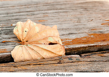 Brown leaf on old wooden abstract background