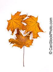 brown leaf tree