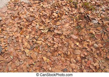 brown leaf  tree on ground
