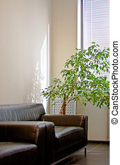 brown leather sofa, window shutters and a green plant in the...