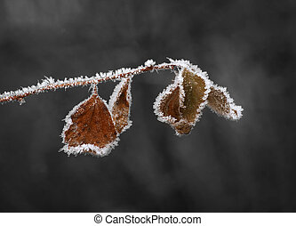 Brown leaves with ice crystals
