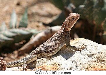 Brown Lizard