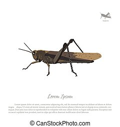 Brown locust on a white background. Image grasshopper side view