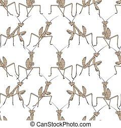 Brown mantis on white seamless background.