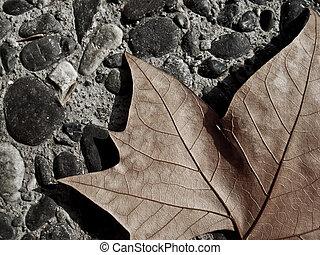 Brown maple leaf in pebbled ground