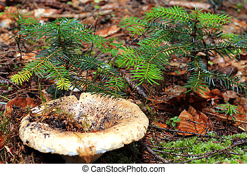 Brown mushroom growing in the autumn forest