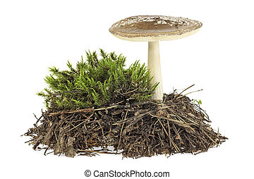 Brown mushroom with green moss isolated on white background