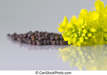 Brown Mustard flower and seeds on white background