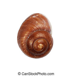 Brown Nautica spiral shell on white with clipping path