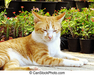 brown orange tabby cat lying on the floor
