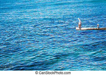 Brown pelican and seagull on the pole on the rippled water background