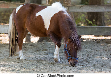 Brown pony stands quietly in a corral on the farm