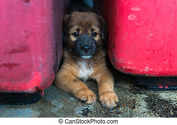 Brown Puppy Dog Lying on the Ground