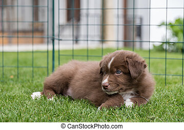 brown puppy is lying in the meadow