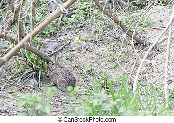 brown rabbit  in a meadow