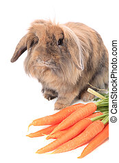 Brown rabbit with carrots