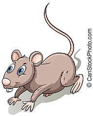 Brown rat - Tiny brown rat with long tail