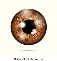 brown realistic eyeball