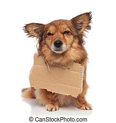 brown sad beggar dog with empty cardboard around neck