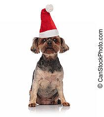 santa toy yorkie with santa hat sitting - brown santa toy...