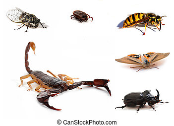 brown scorpion and insects