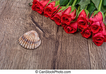 Brown shell and roses on wooden background