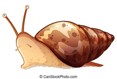Brown snail on white background