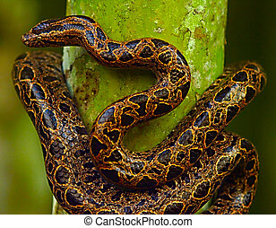 Brown snake on a tree