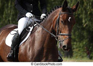 Brown sport horse portrait during dressage test