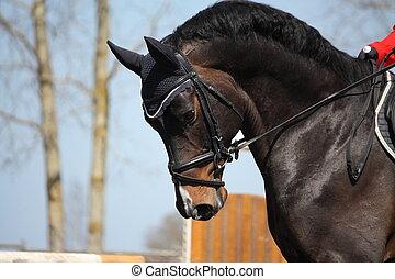 Brown sport horse portrait during s