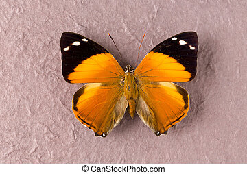 Brown spotted butterfly