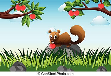 Brown squirrel in apple orchard