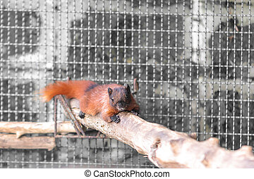 Brown squirrel on branch