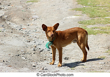 Brown Stray Dog on a Street