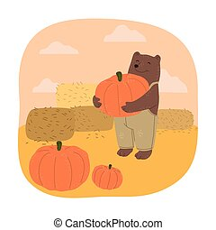 Brown teddy bear farmer holding ripe pumpkin during harvesting