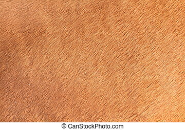 brown texture of horse hair