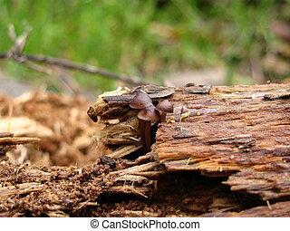 brown tree mushroom