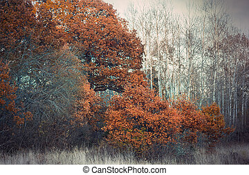 Brown trees in autumn landscape