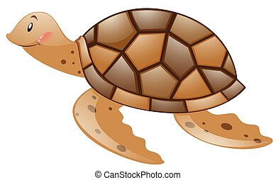 Brown turtle on white background