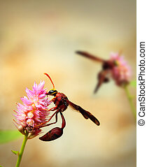 Brown wasps pollinating flowers in a field of beautiful pink...