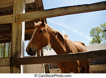 Brown young horse in the stable
